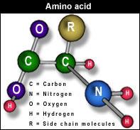 amino_acid