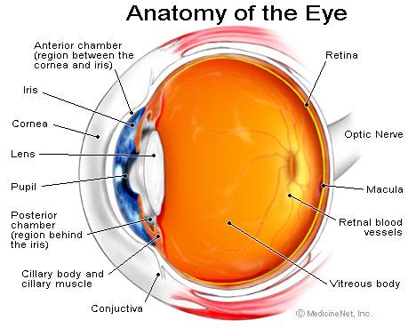 eye_cutaway