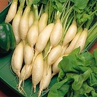 Radish Long White