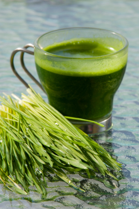 wheat_grass_cup